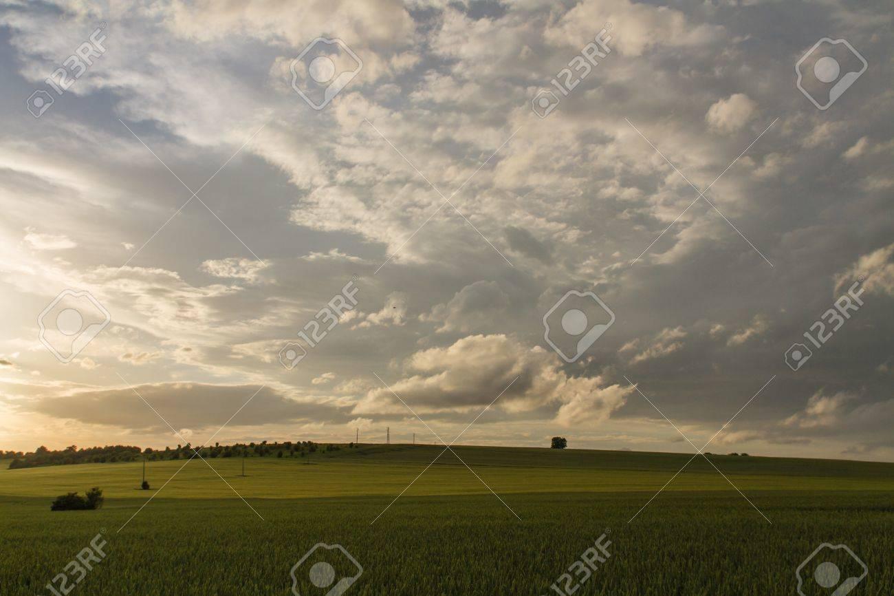 Green Wheat filed Blue sky and sun glare - 20882897