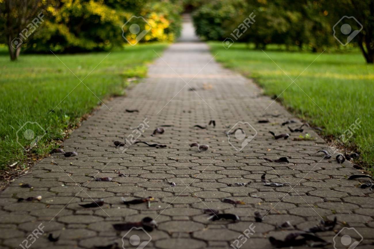 Path to Success Concept Background Nature Park - 21050014