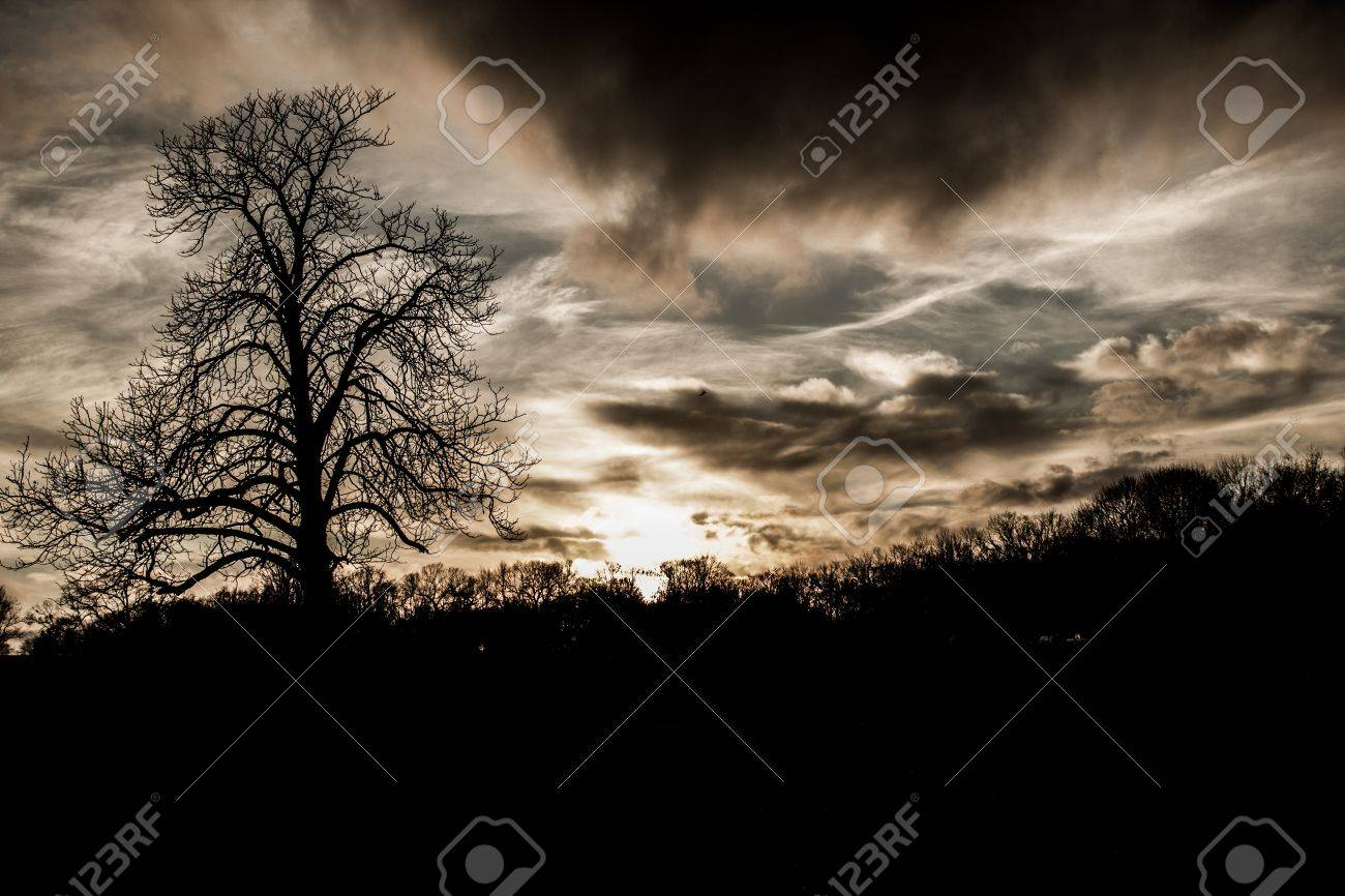 Scary Spooky tree background - 21050069