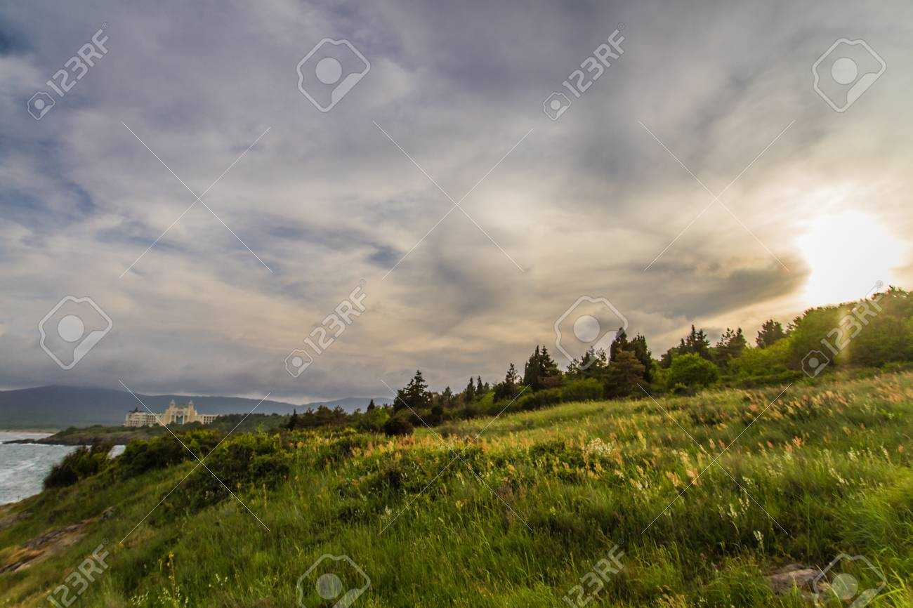 Sunset on the green field with grass and trees - 21050098