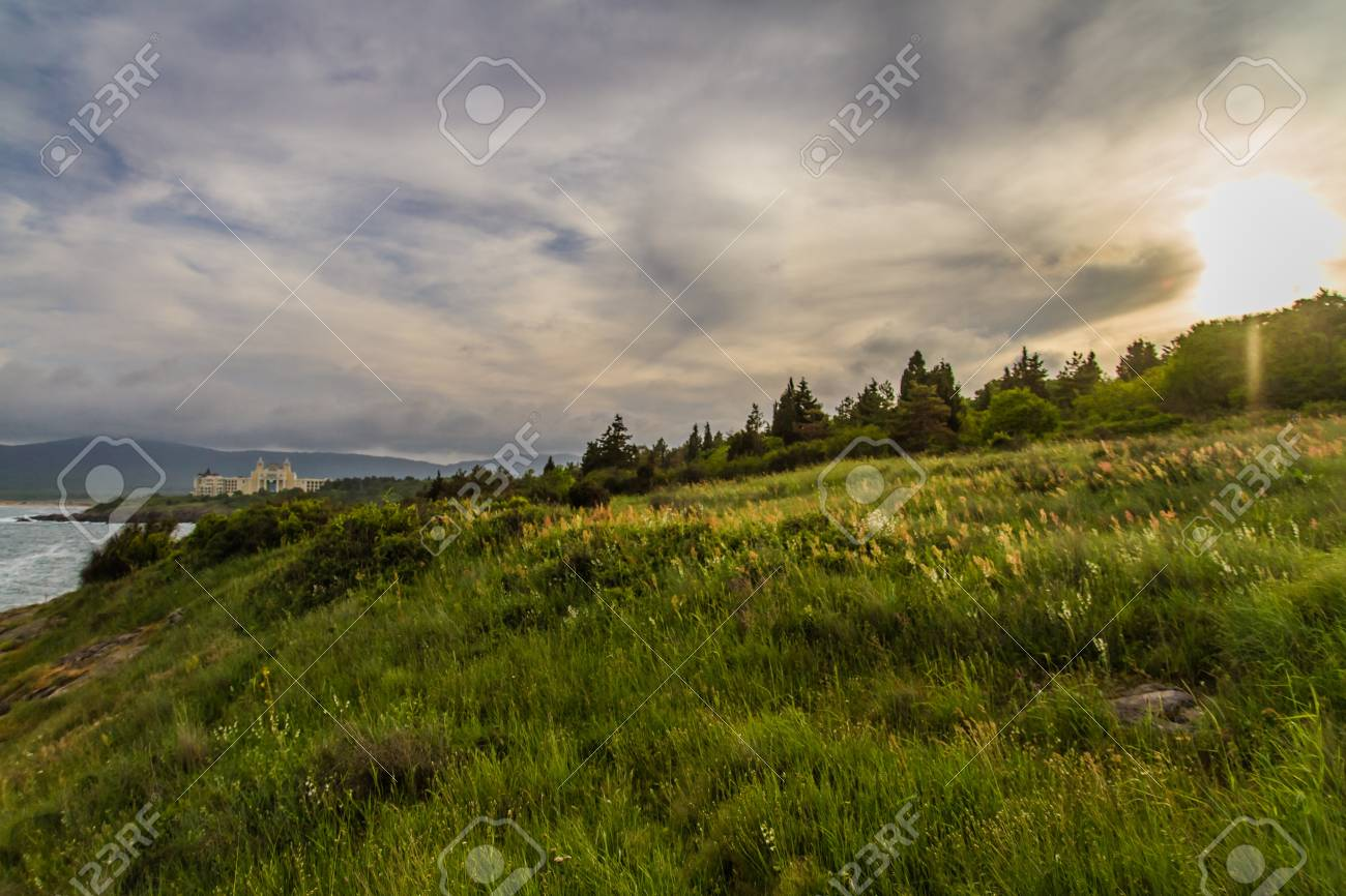 Sunset on the green field with grass and trees - 21050099