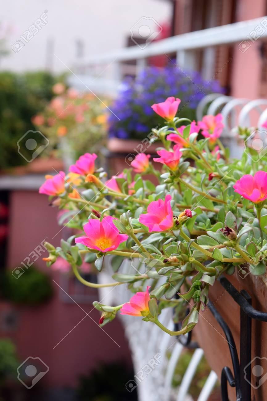 Balkon Mit Blumentöpfen Lizenzfreie Fotos, Bilder Und Stock ...