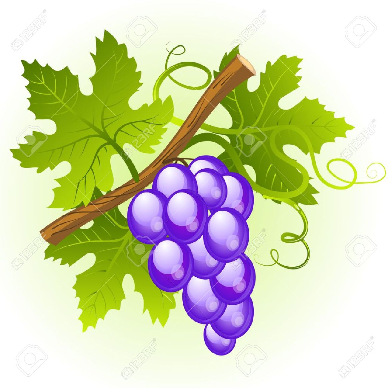 Grape cluster with green leaves Stock Vector - 11126019