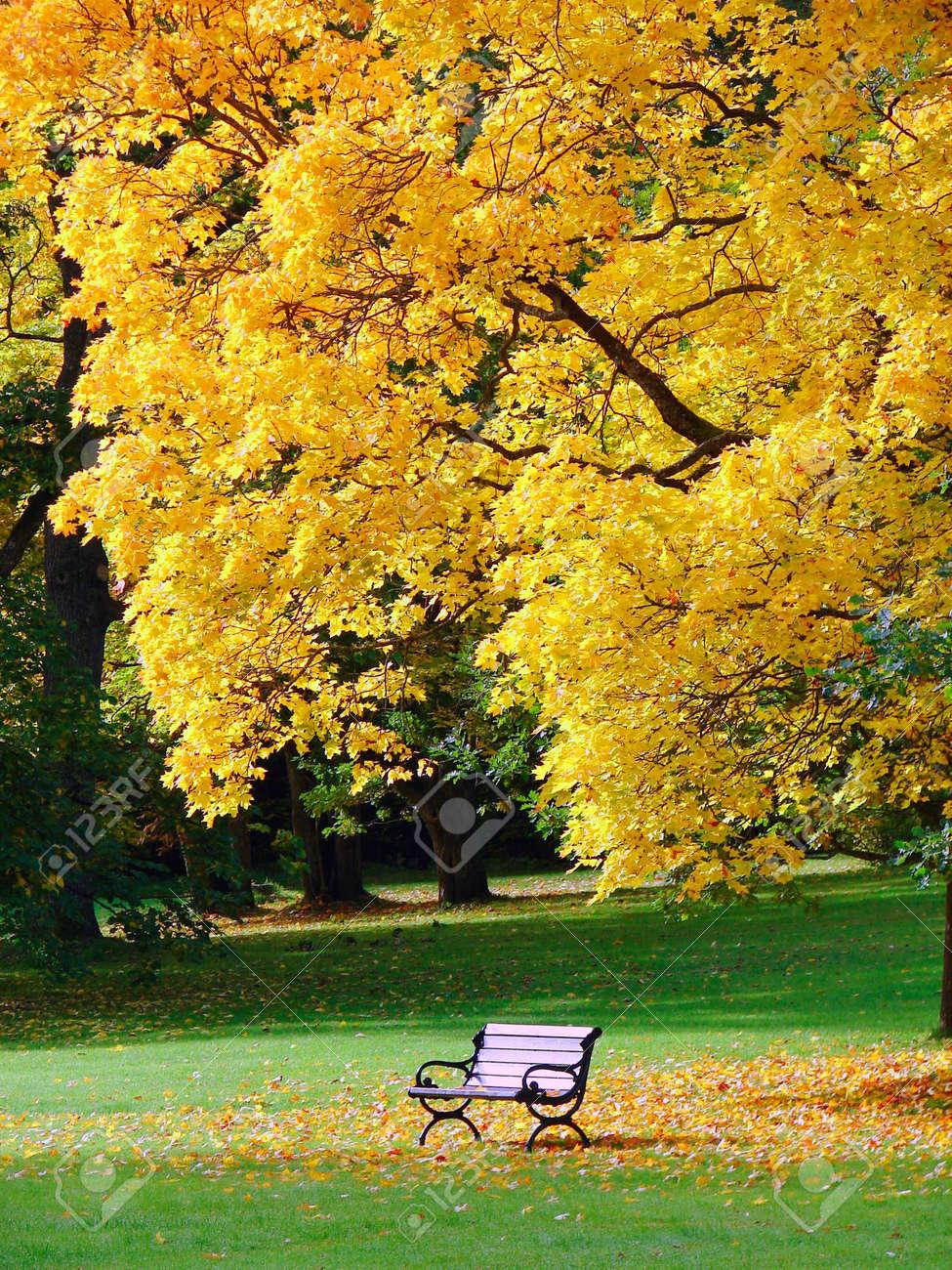 City park in autumn Stock Photo - 7633577