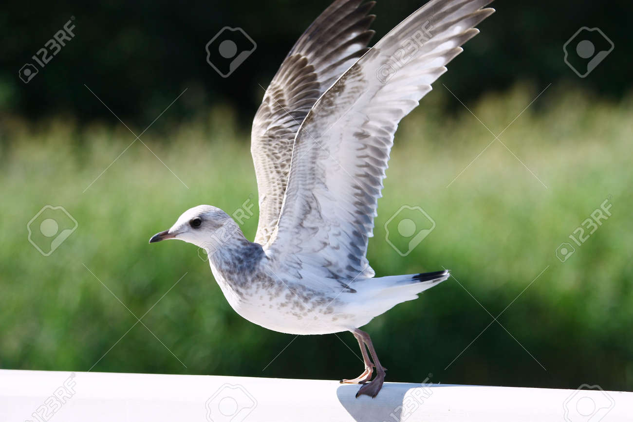 Flying up seagull on green background Stock Photo - 9651768