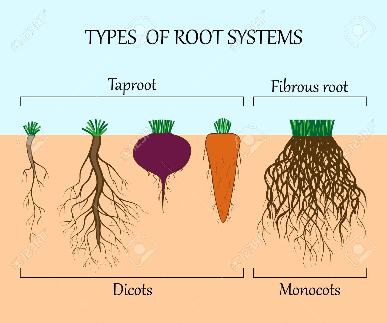 Root system of various plants