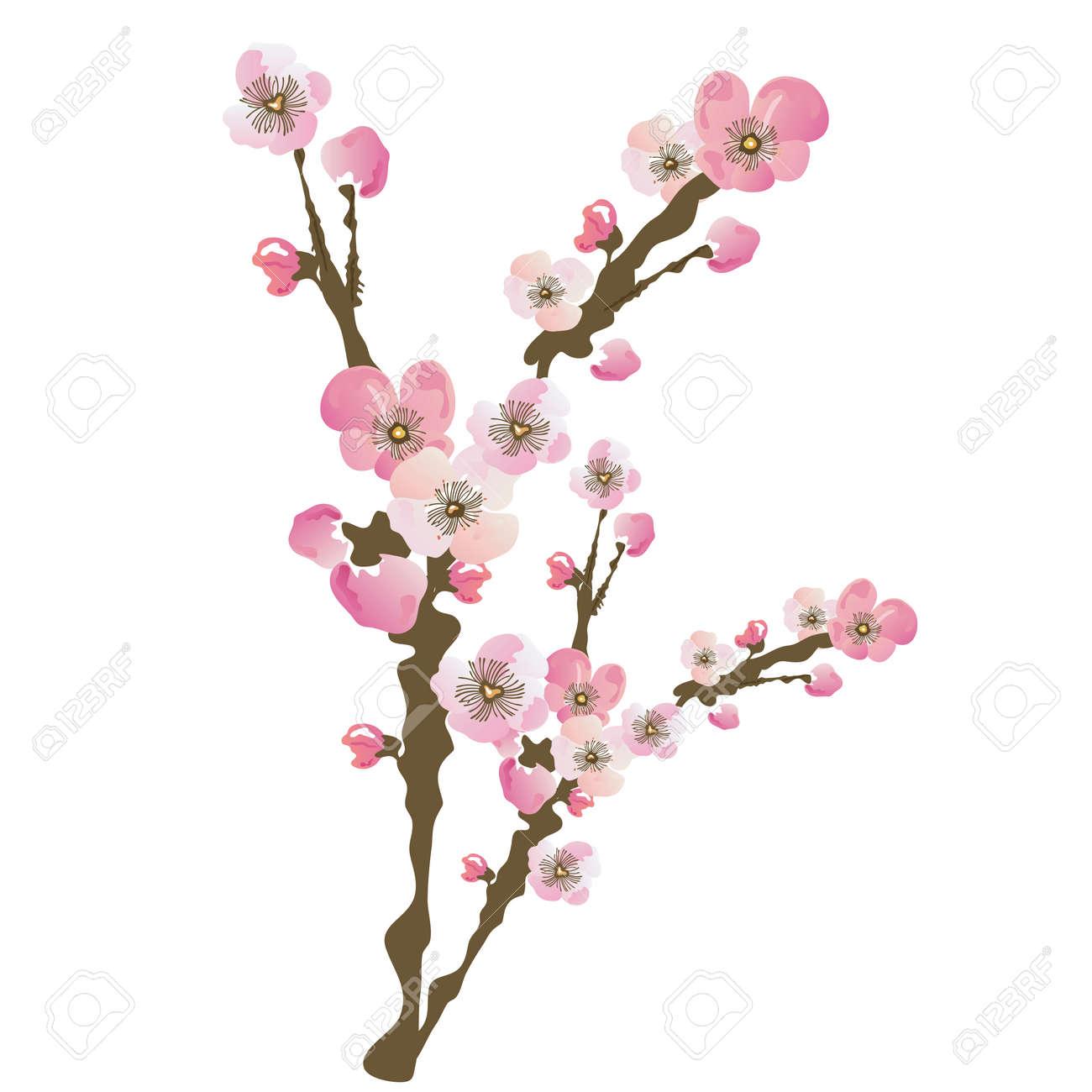 Ilustración De La Flor De Las Flores De Cerezo Ilustraciones