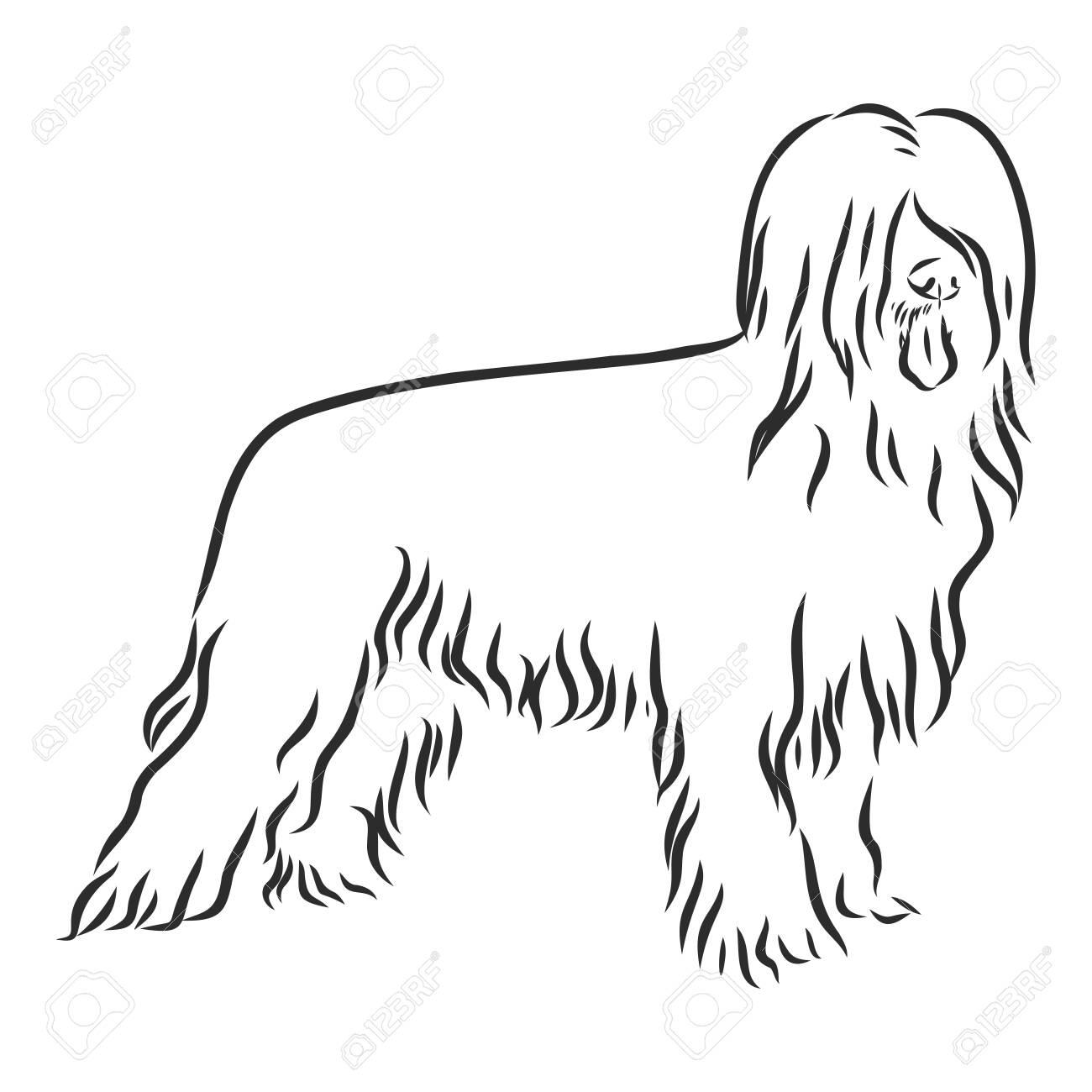 Briard French shepherd dog sketch, contour vector illustration - 136138303
