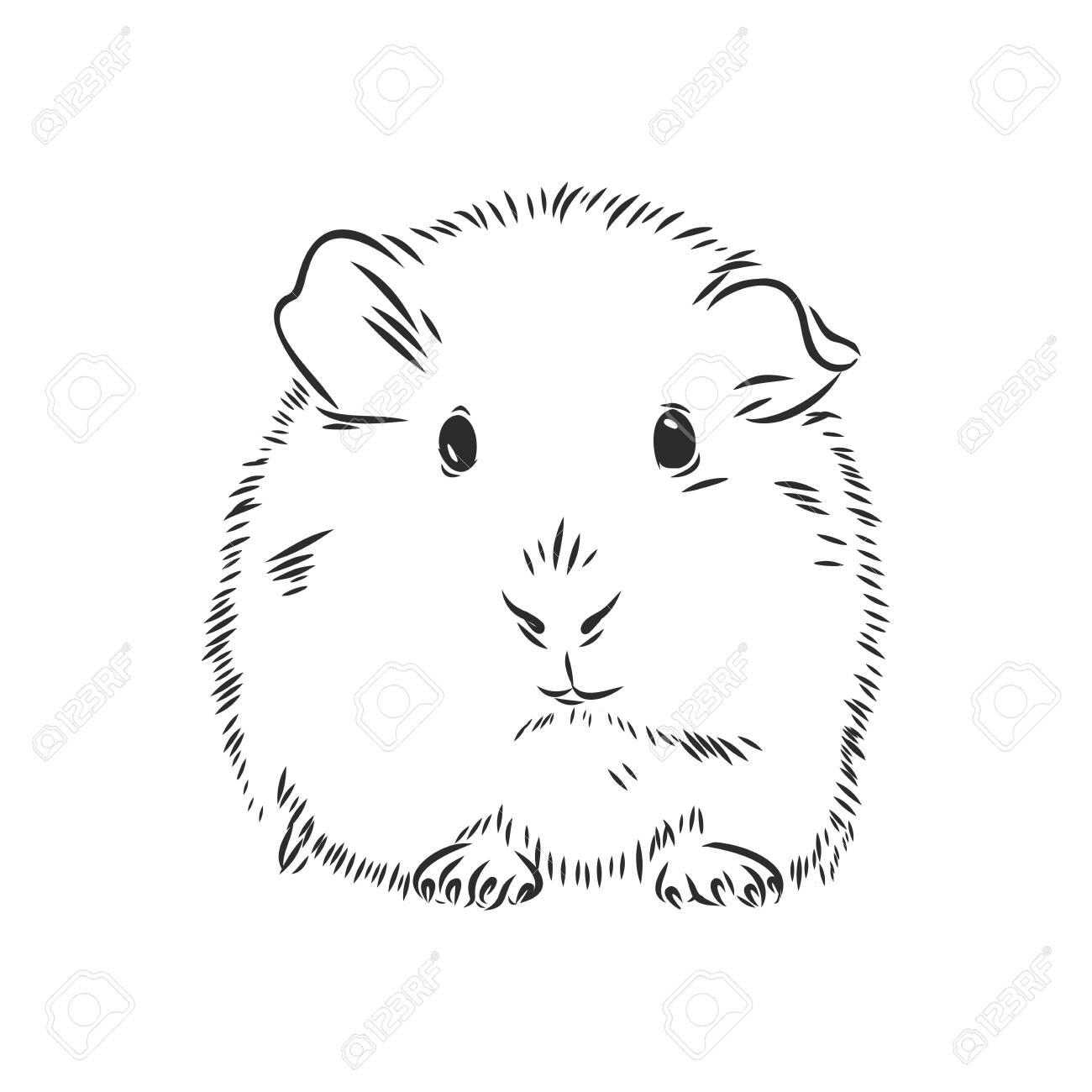 Guinea Pig Or Cavy Inky Hand Drawn Sketch Vector Illustration Royalty Free Cliparts Vectors And Stock Illustration Image 144377232