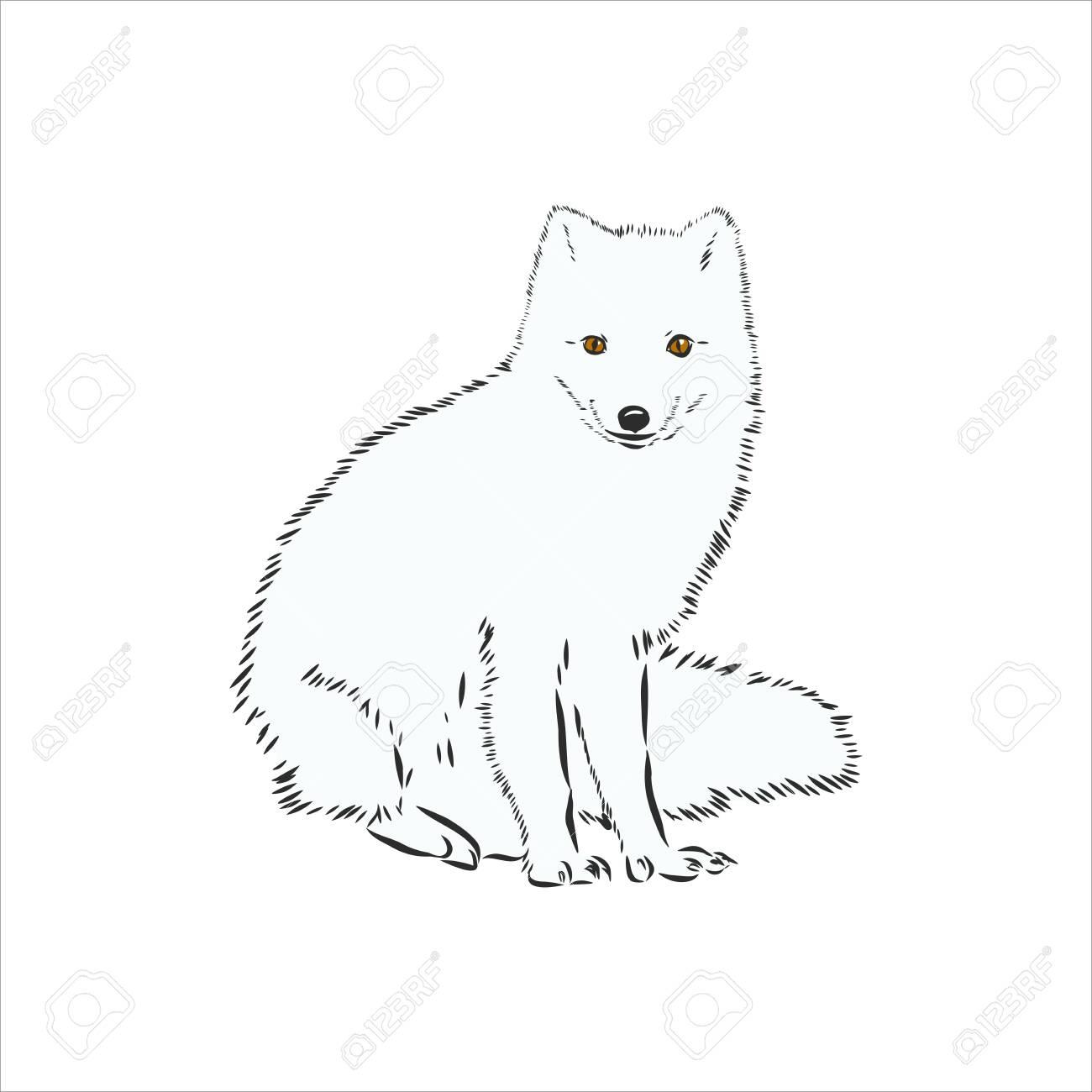 arctic fox polar fox