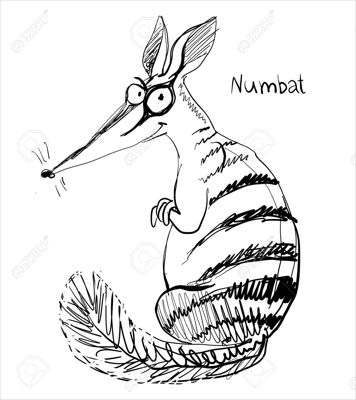 Vector. Graphic black and white sketch of a funny numbat. - 168498440