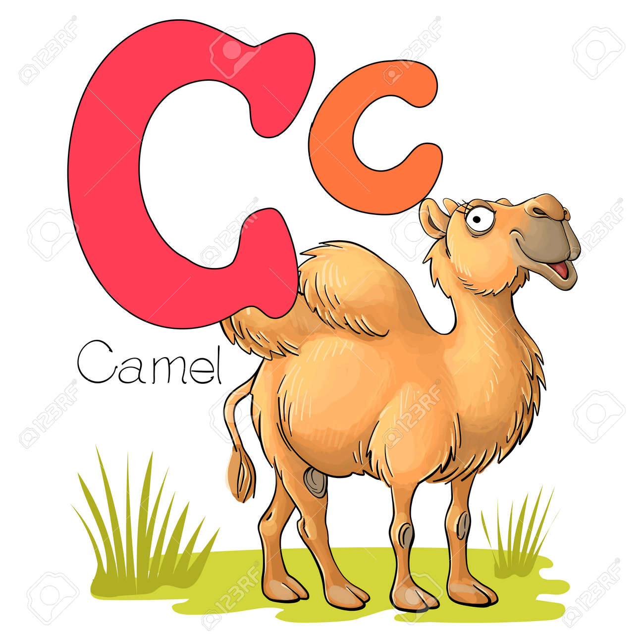 Vector illustration. Alphabet with animals. Large capital letter C with a picture of a bright cute camel - 168498450