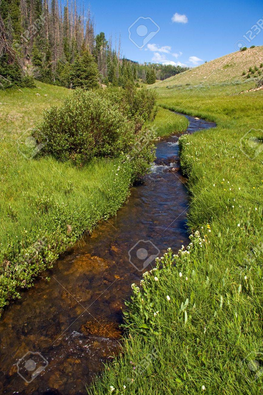 A clear creek and green meadow in a beautiful mountain valley. Stock Photo - 5205877