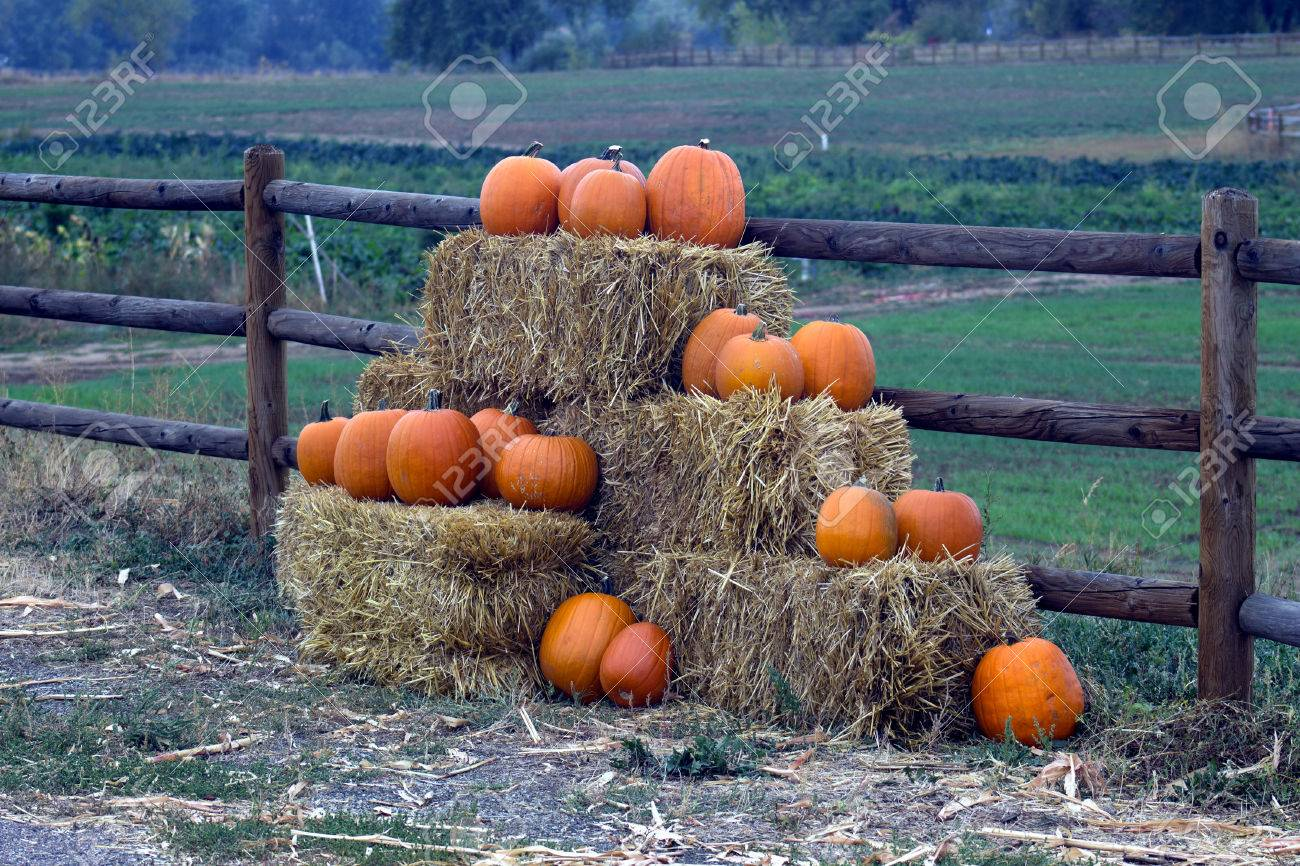 pumpkins hay bales fence farm halloween post gord - Farm Halloween