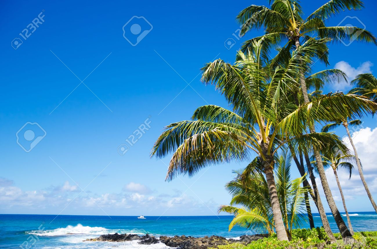 Coconut Palm tree by the ocean in Hawaii, Kauai Stock Photo - 20609886