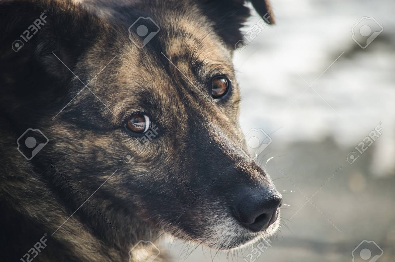 Sad look of a lonely homeless dog - 98833603