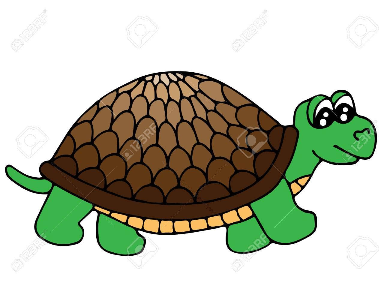Nette Bunte Schildkröte Lokalisiert Auf Dem Weißen Hintergrund ...