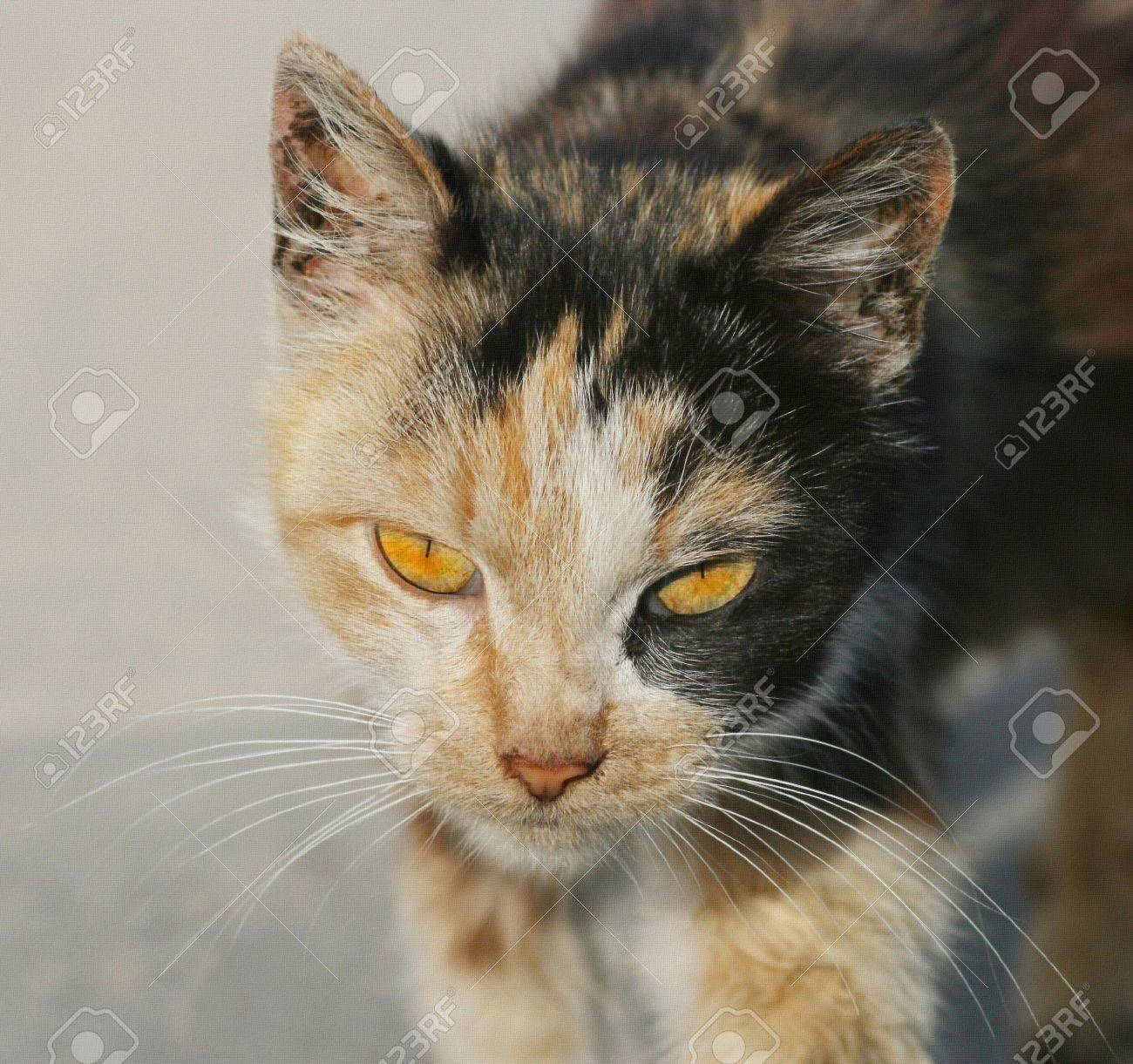 Cat with textured Stock Photo - 6221131