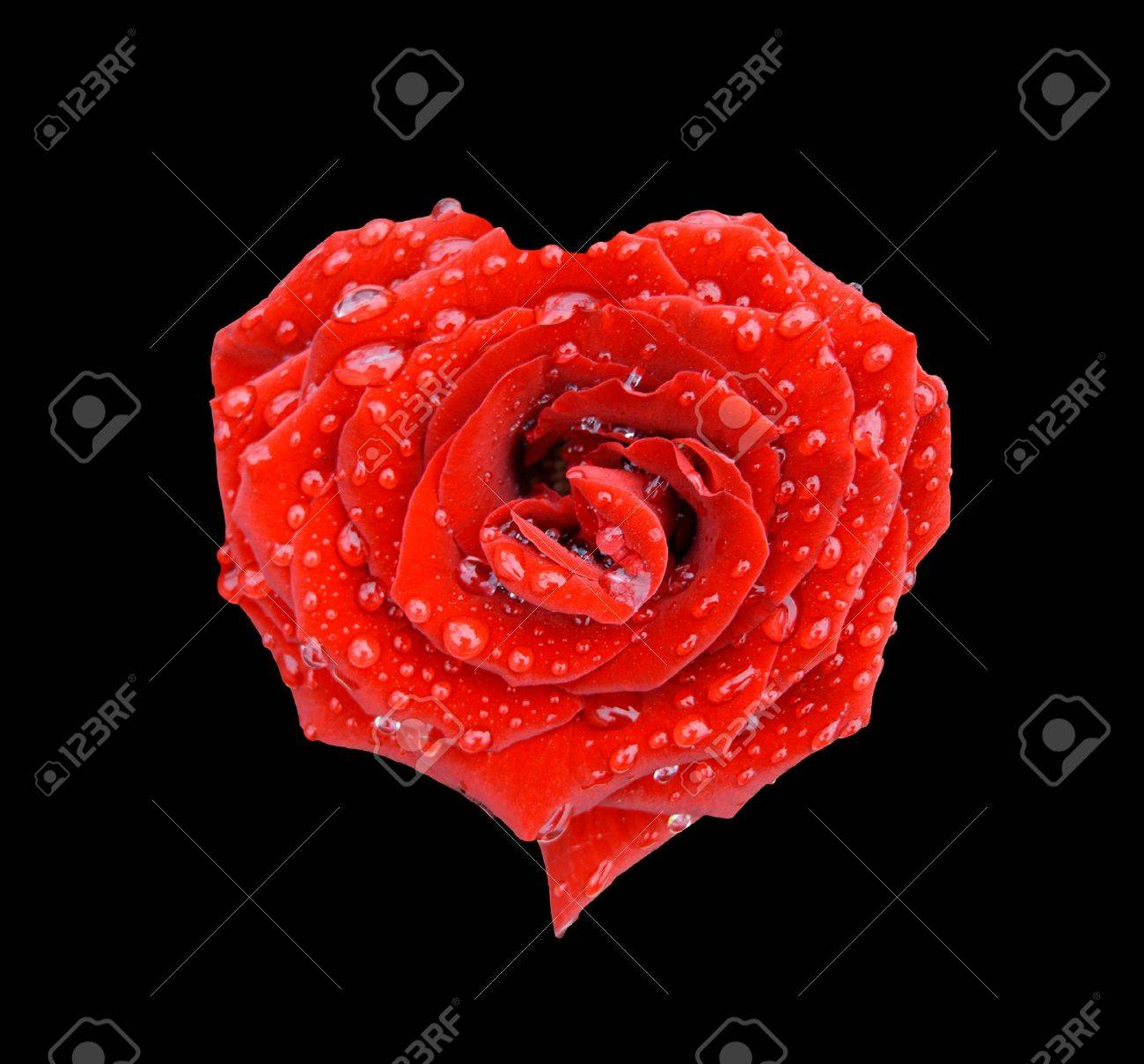 Rose Heart In Tears Over Black Stock Photo Picture And Royalty Free