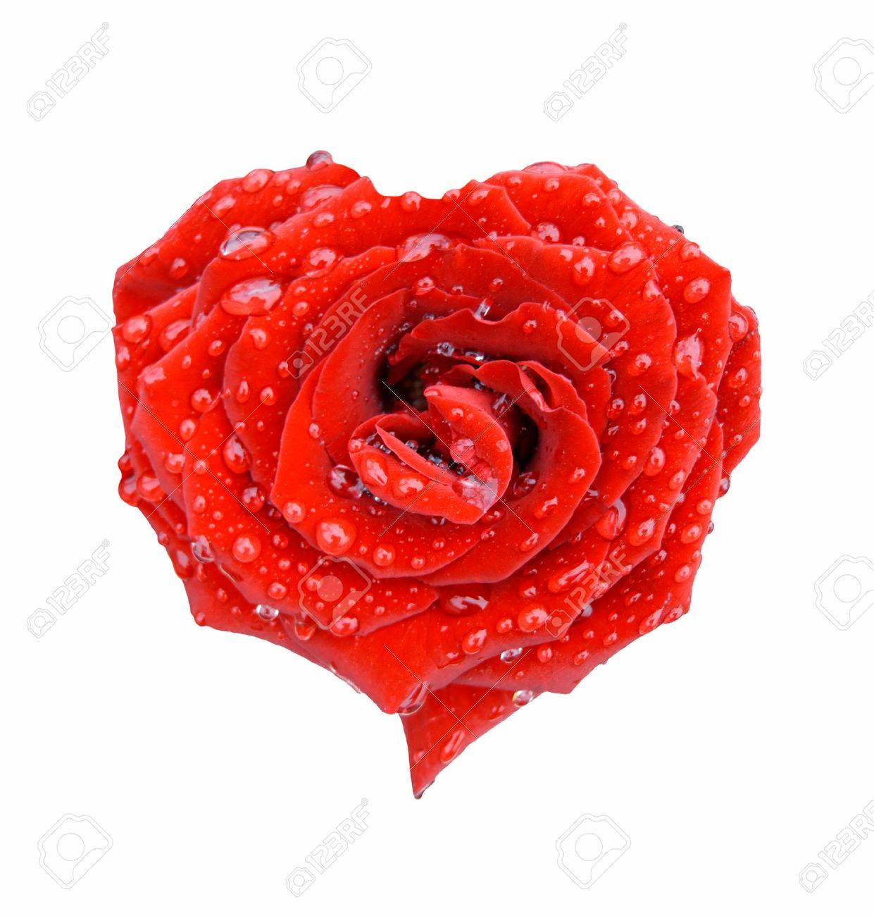 Red rose in the form of heart in drops over white - 1341241