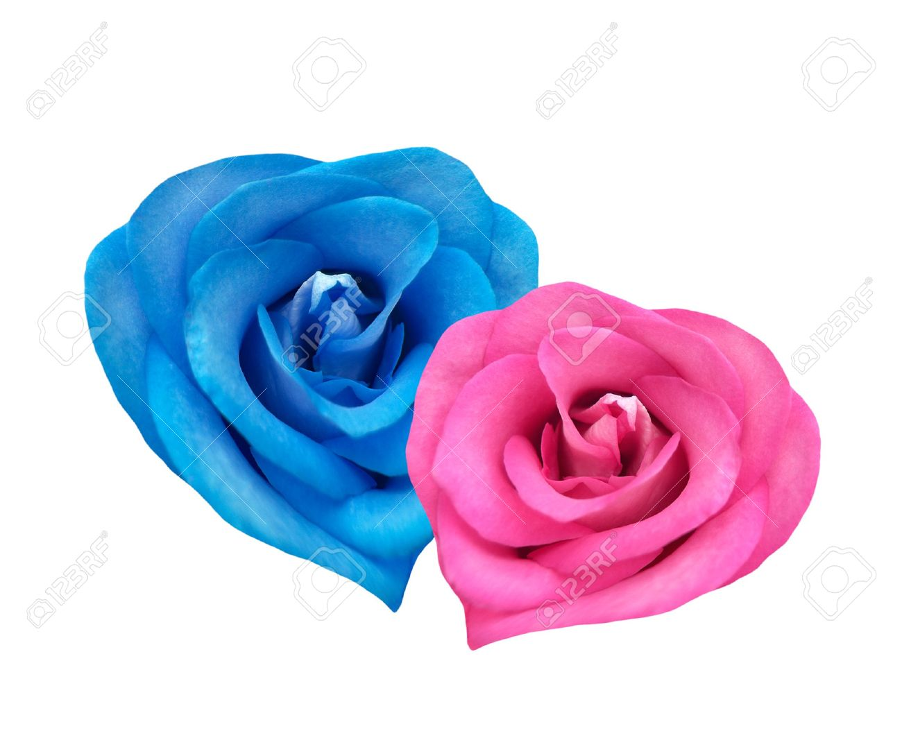 Red and blue roses in the form of hearts together - 2492490