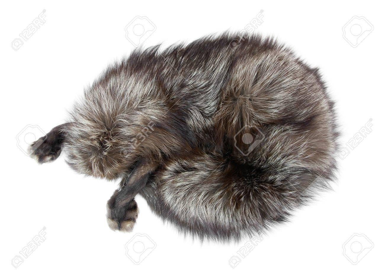 Fur collar as silver fox - 9196429