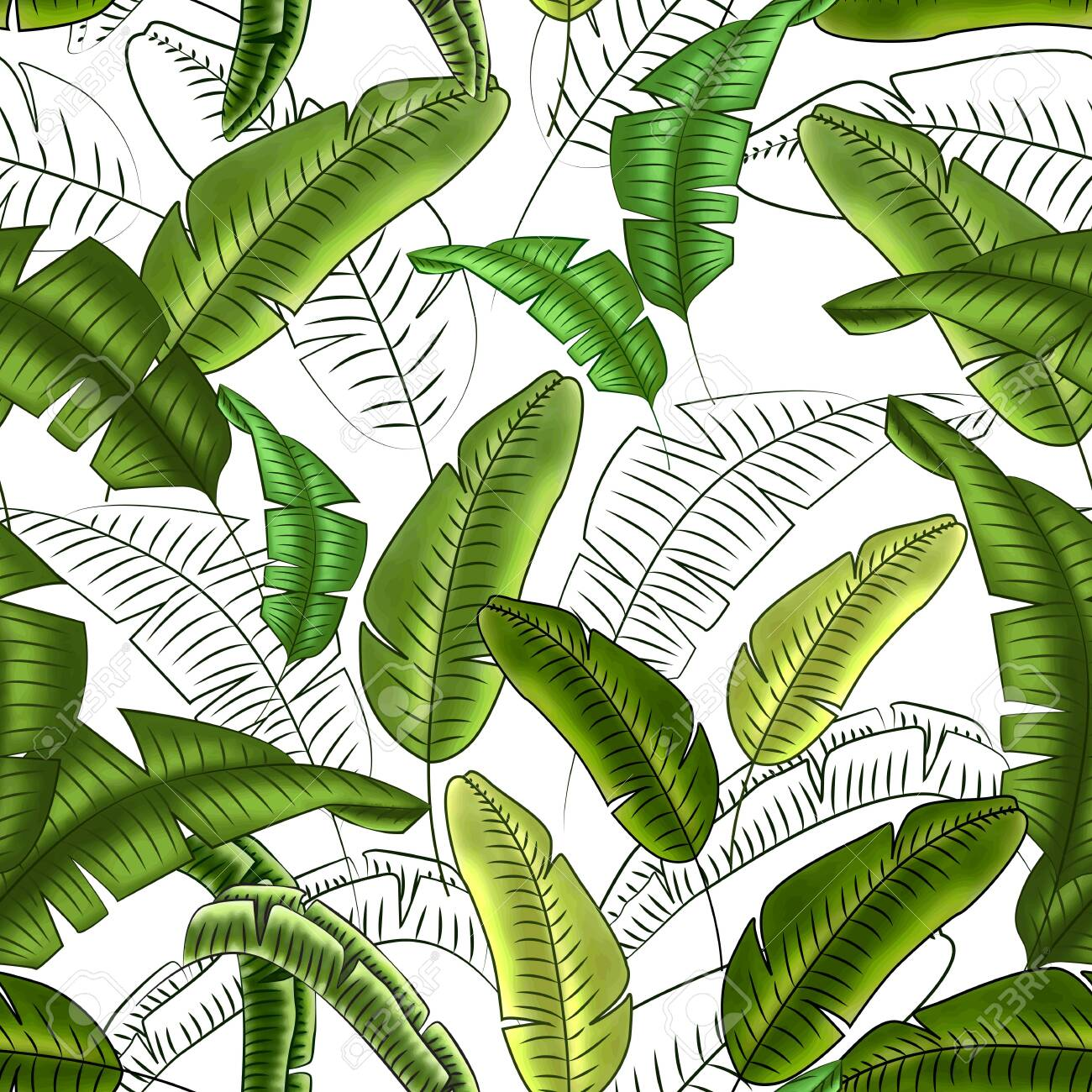 Seamless floral pattern of tropical banana leaves, shades of green, white background. Great for decorating fabrics, textiles, gift wrapping, printed matter, interiors, advertising. - 149669434