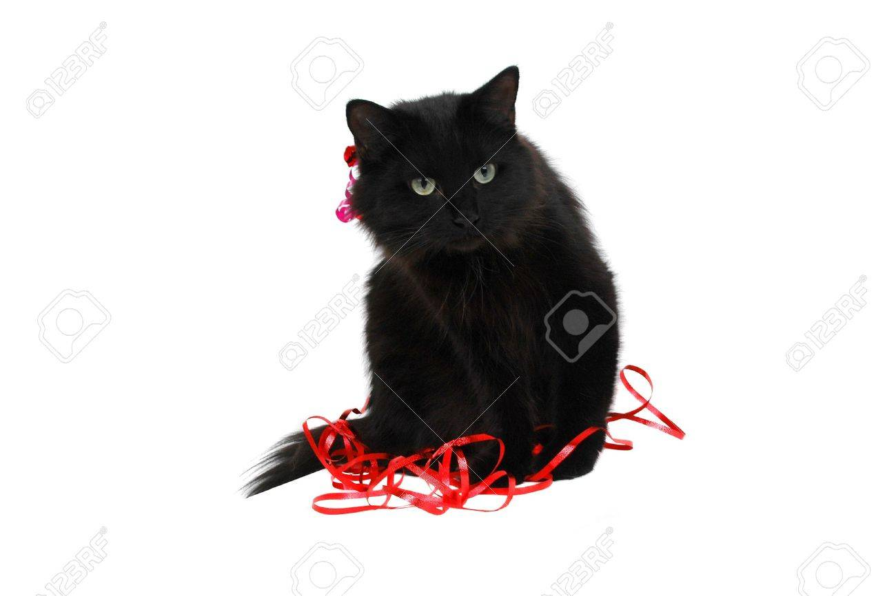 Black Cat Christmas Or Birthday Gift Close Up Stock Photo