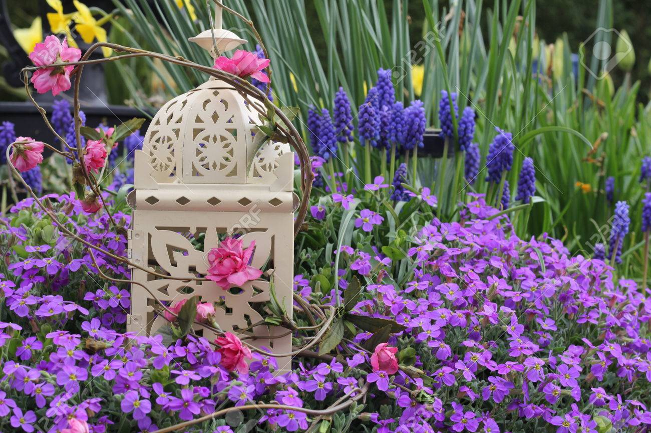 shabby chic metal bird cage in a spring garden purple aubrieta rh 123rf com purple shabby chic bedroom purple shabby chic bedroom ideas