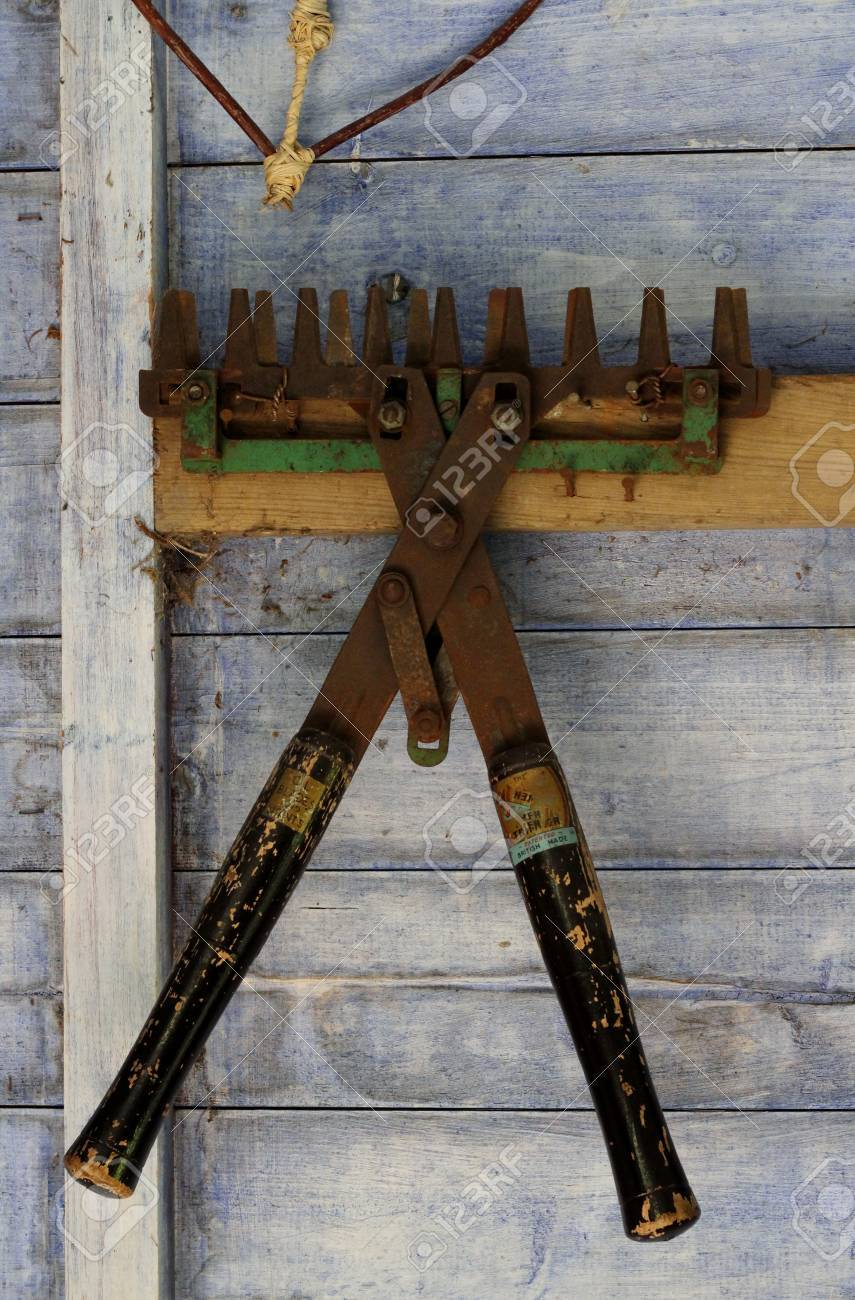 Antique Rusted Garden Tools Hanging In A Vintage Blue Painted Woden Shed  Stock Photo   44328059