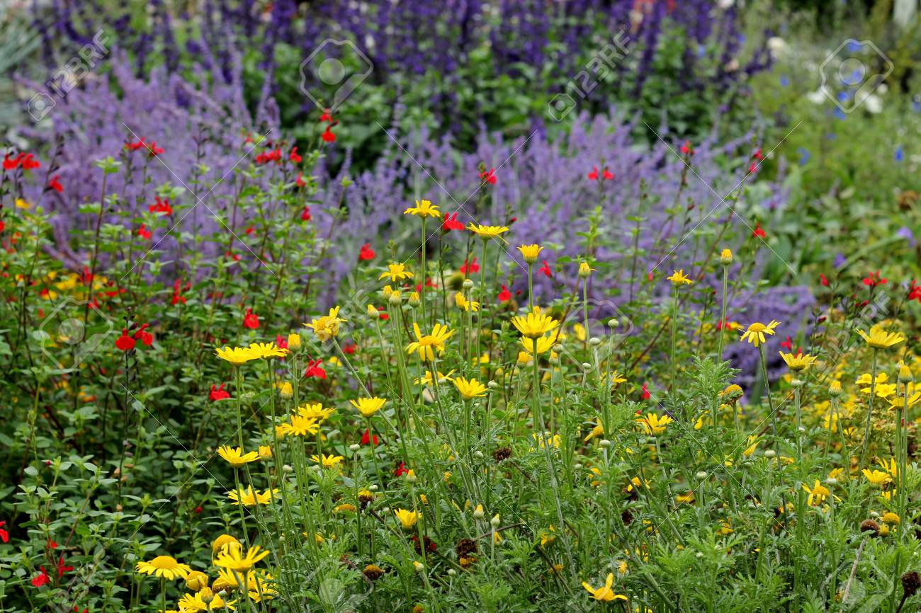 Colourful Flower Garden Border, Yellow, Purple And Red Flowers Stock Photo    89704764