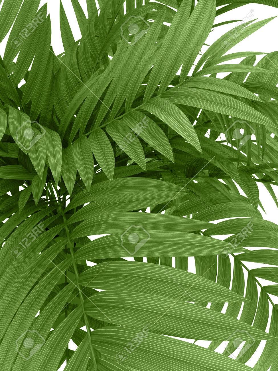 Siepe Di Bambu Prezzo.Siepe Di Bambu