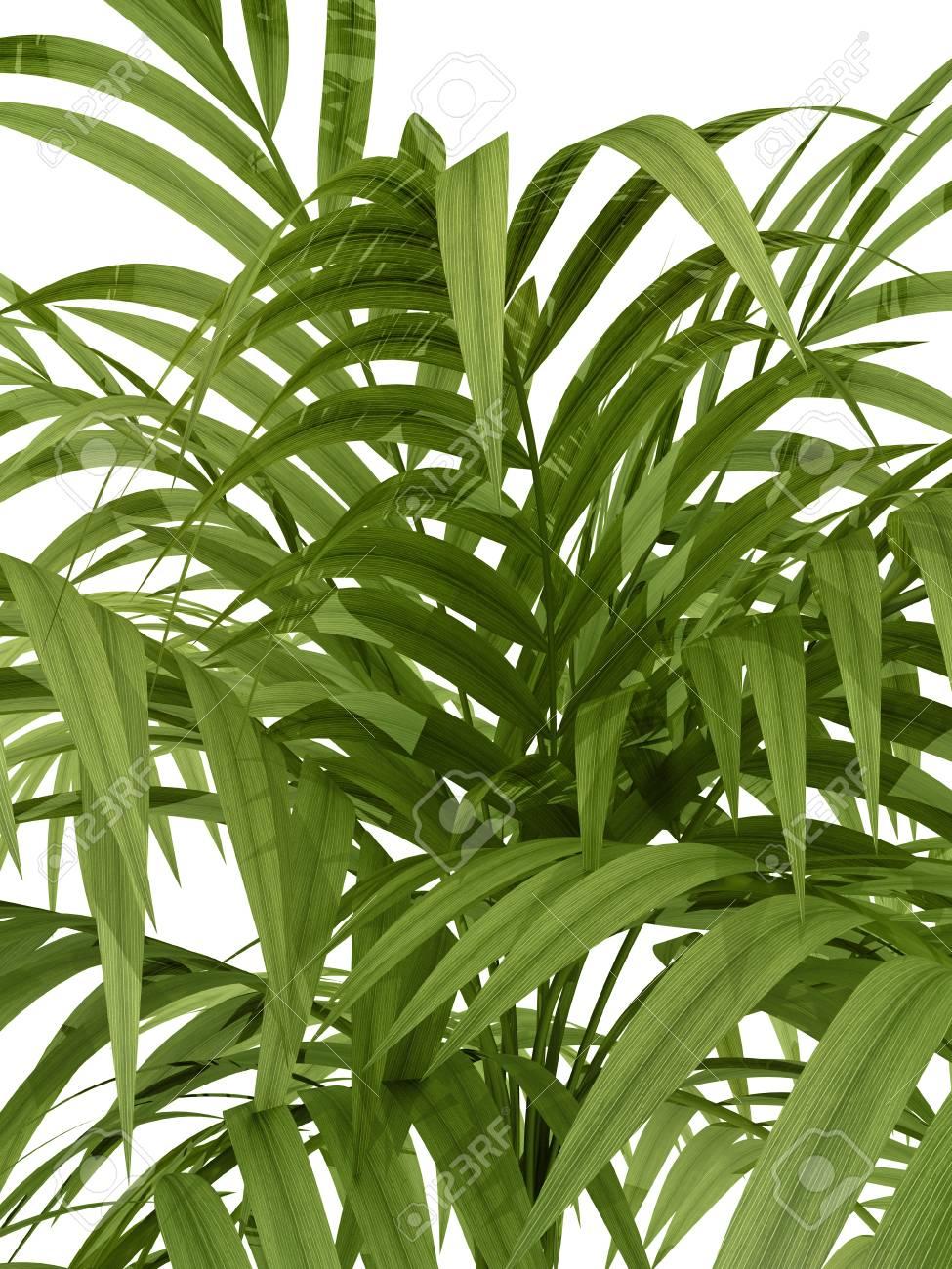 Siepe Di Bambu Prezzo.Immagini Stock Tropicali Pianta Fernleaf Rami Siepe Di Bambu Su