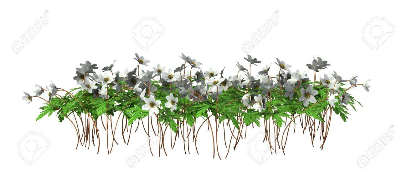 Green Plants With Flowers Isolated On White Background Stock Photo