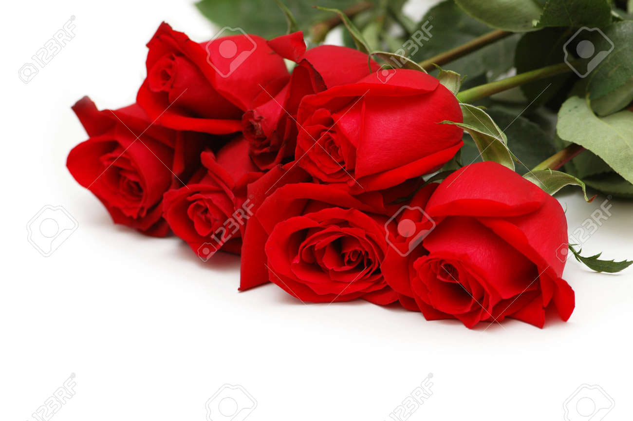 Red roses isolated on the white background Stock Photo - 2528273