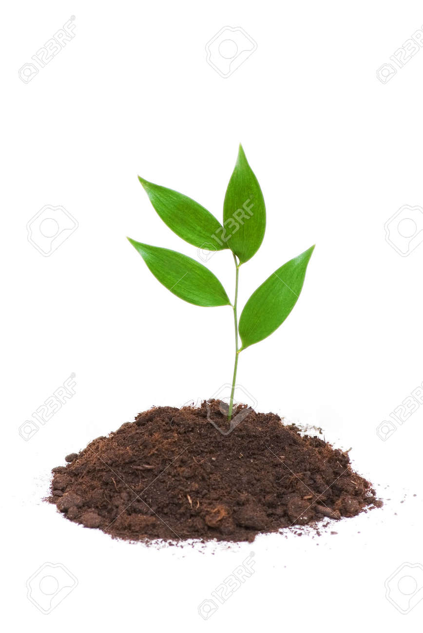 Seedlings growing isolated on the white background Stock Photo - 2820549