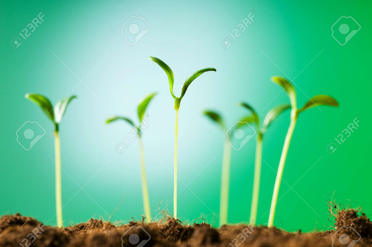 Green seedling illustrating concept of new life Stock Photo - 7664605