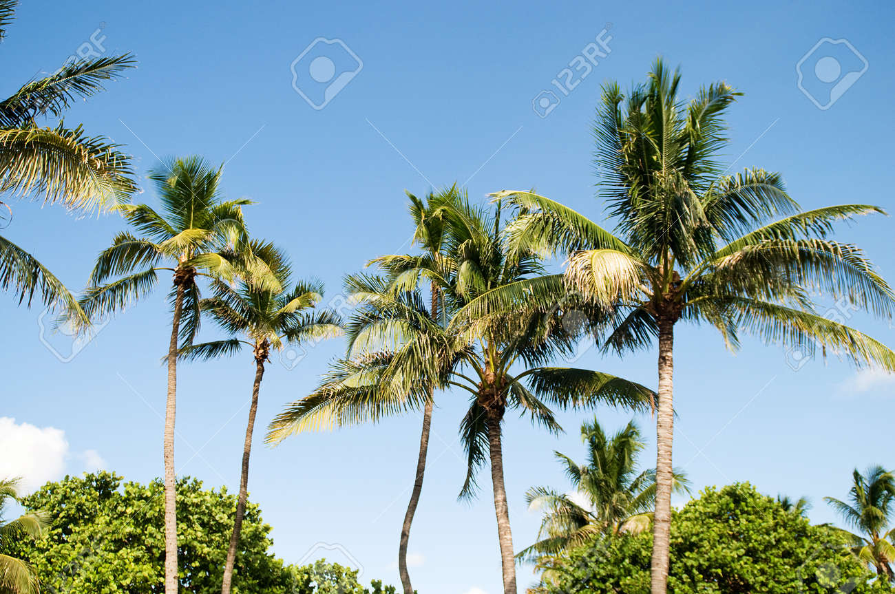 Palms trees on the beach during bright day Stock Photo - 8028174