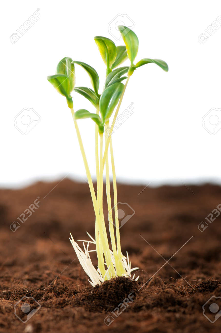Green seedling illustrating concept of new life Stock Photo - 8615028