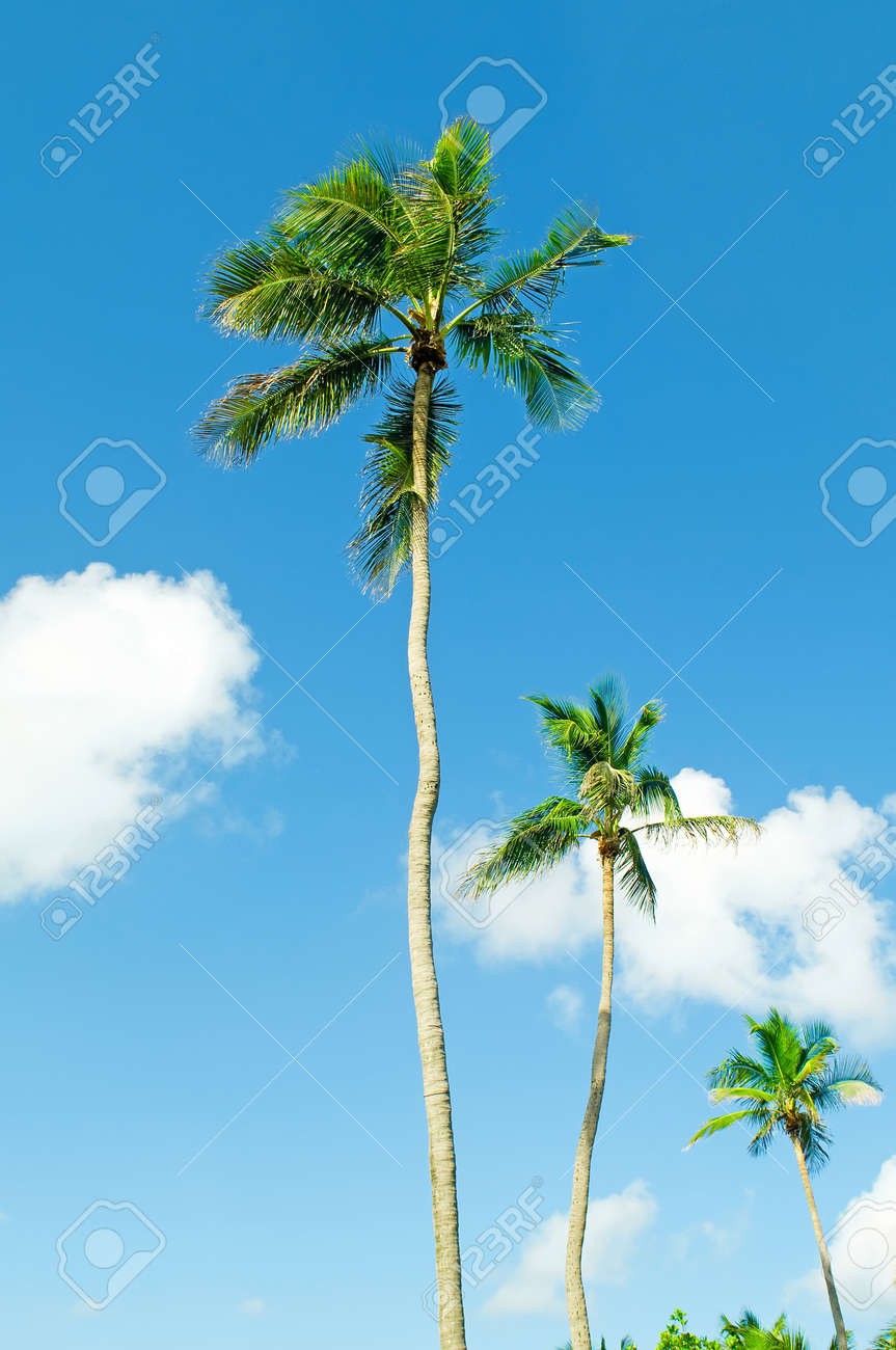 Palms trees on the beach during bright day Stock Photo - 8738461