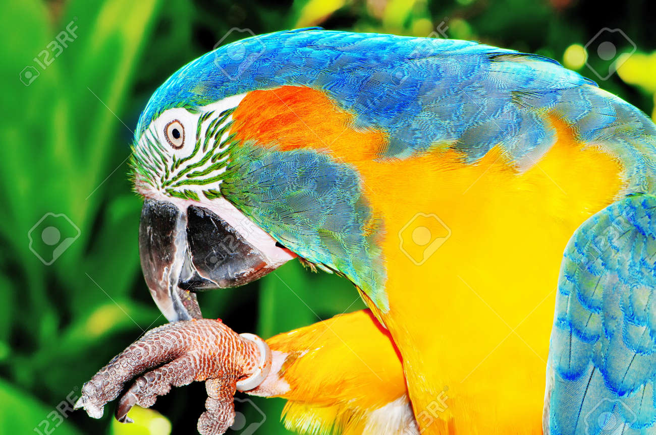 Colourful parrot bird sitting on the perch Stock Photo - 8943704