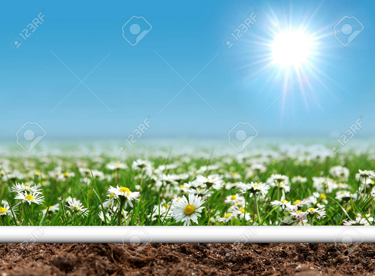 Daisies field with curled page Stock Photo - 8943476