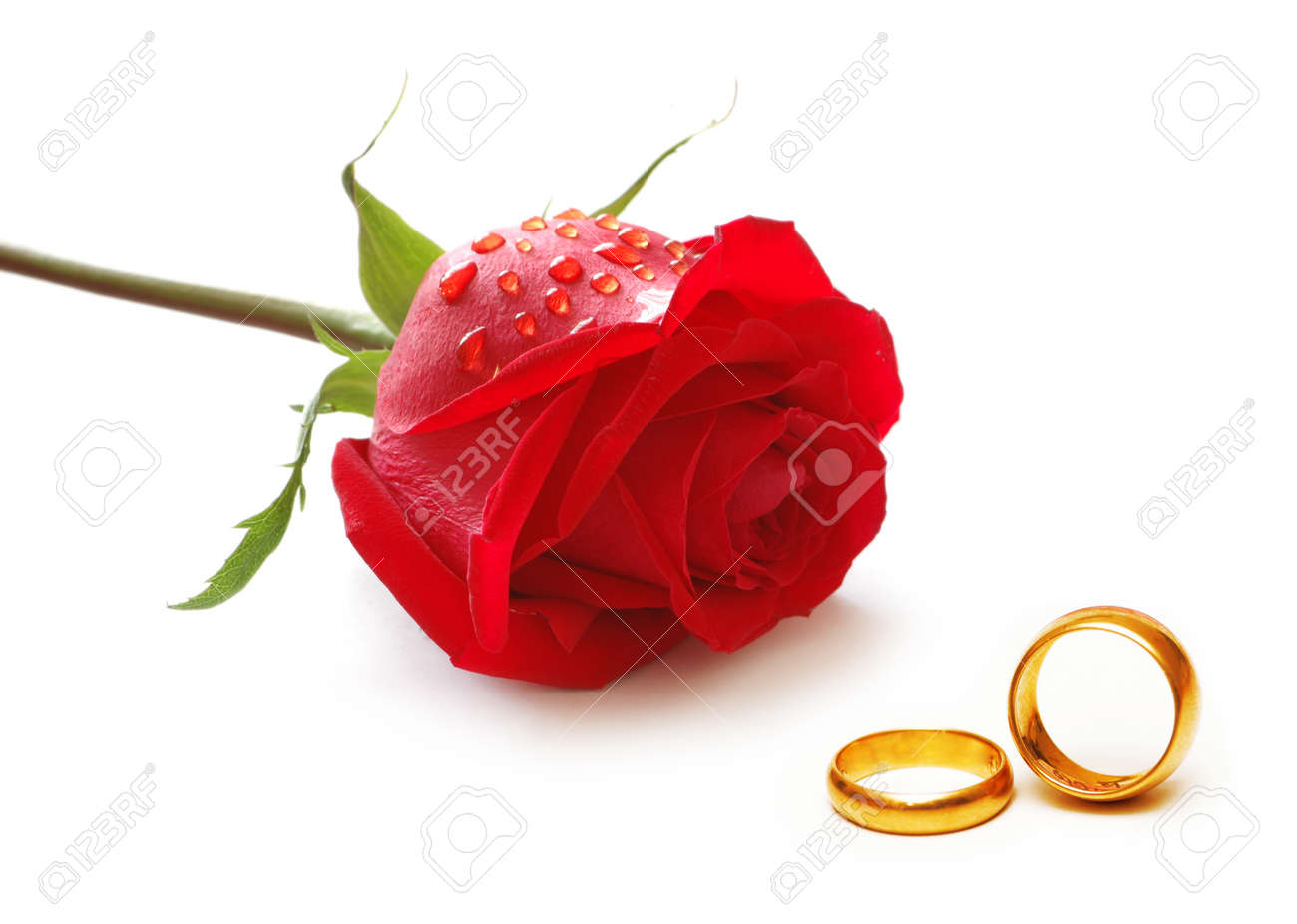Wedding concept with roses and rings - 10557920