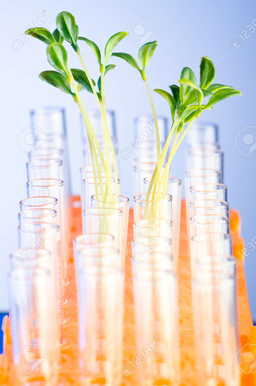 Experiment with green seedlings in the lab Stock Photo - 10674725