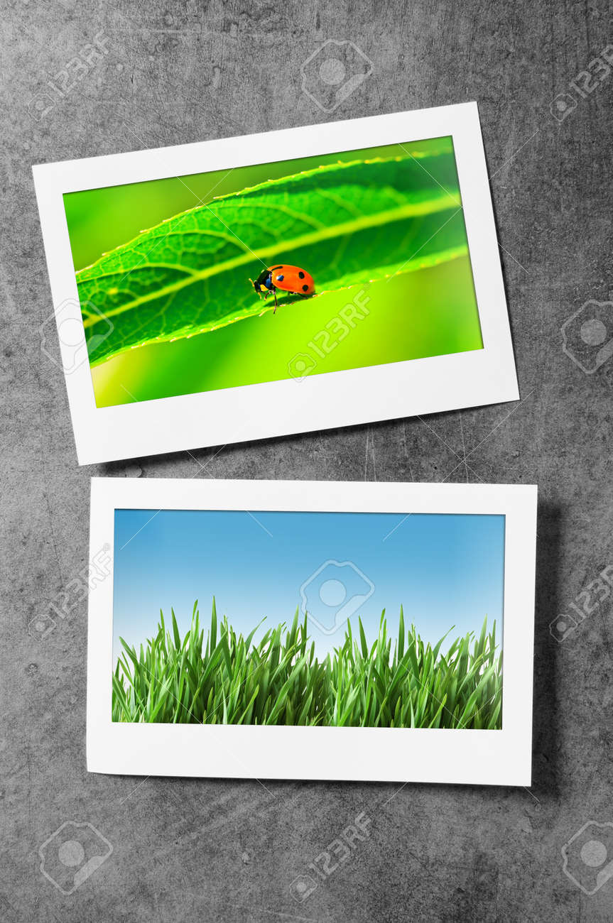 Nature photos in picture frames Stock Photo - 10958518