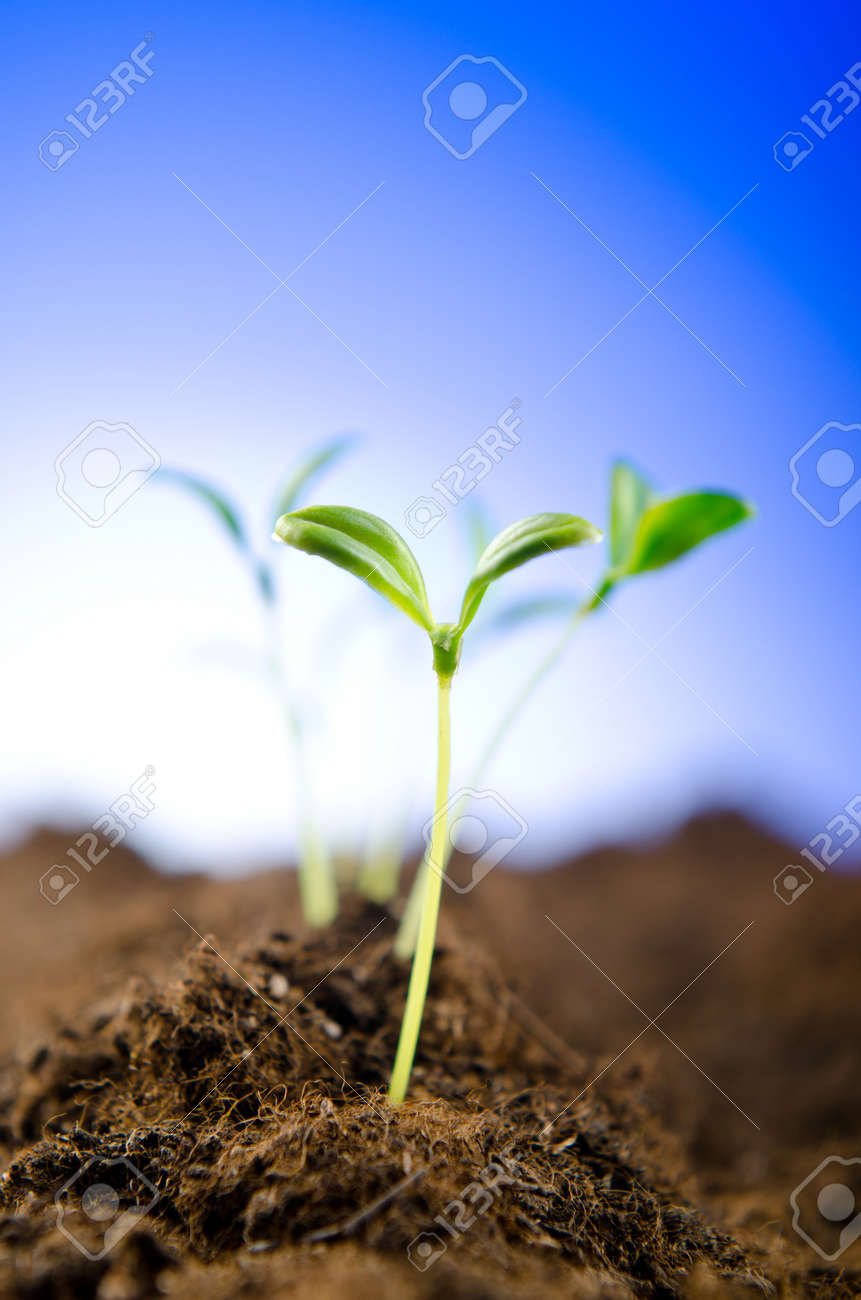 Green seedlings in new life concept Stock Photo - 11075406