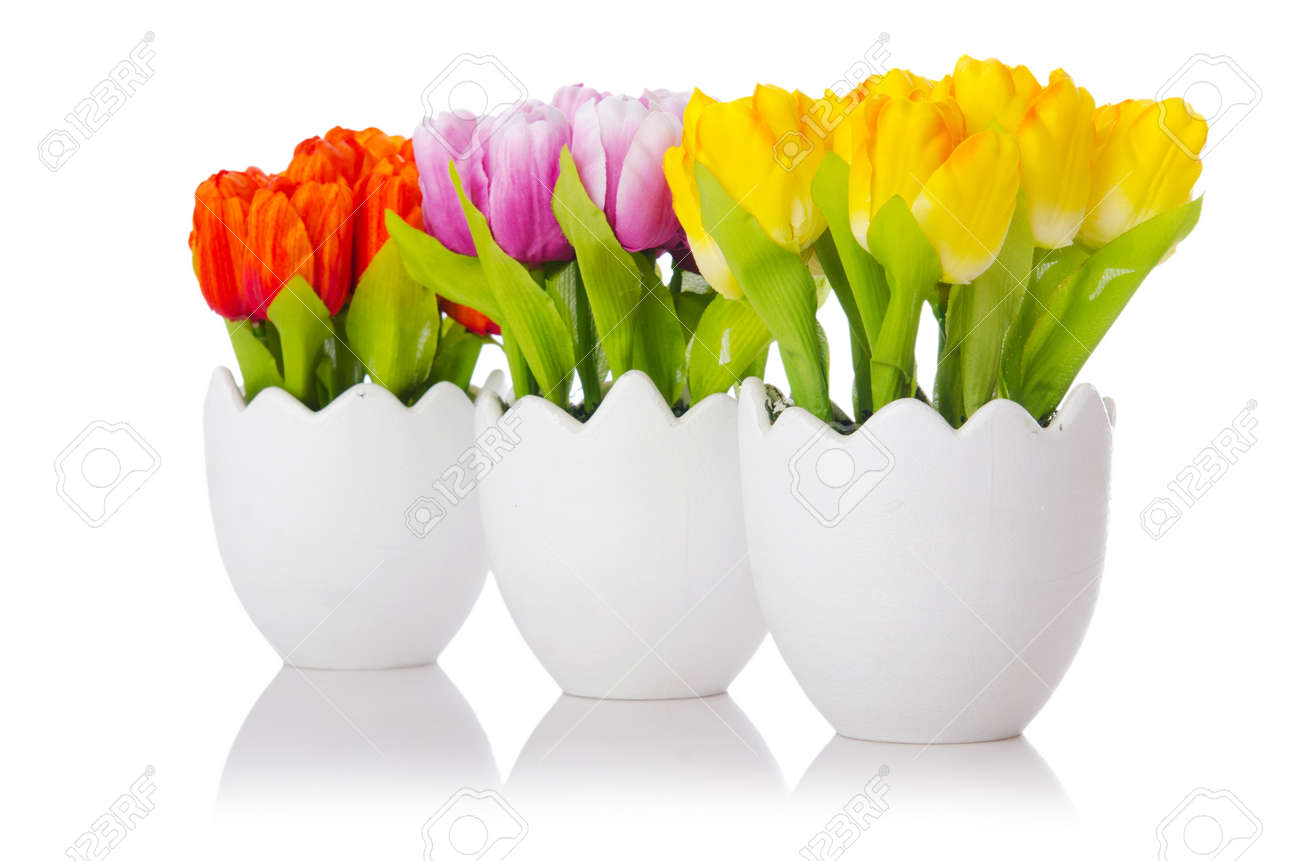 tulips flowers isolated on the white stock photo, picture and, Beautiful flower