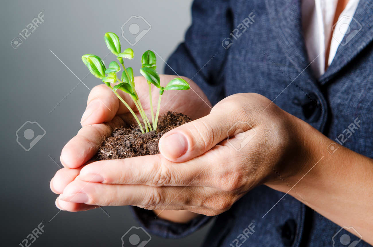 Businesswoman with seedlings and coins Stock Photo - 15081658