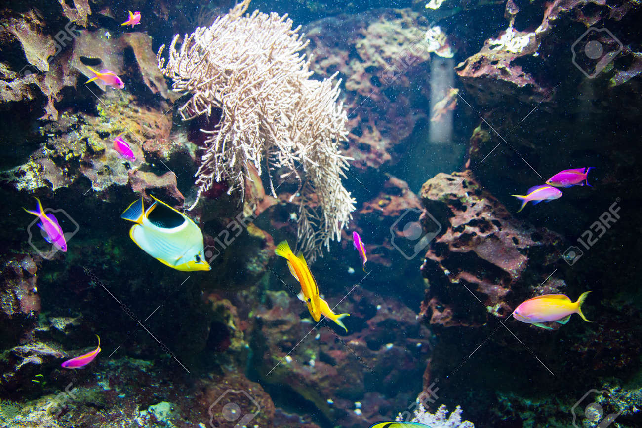Tropical fish under the water Stock Photo - 22873504