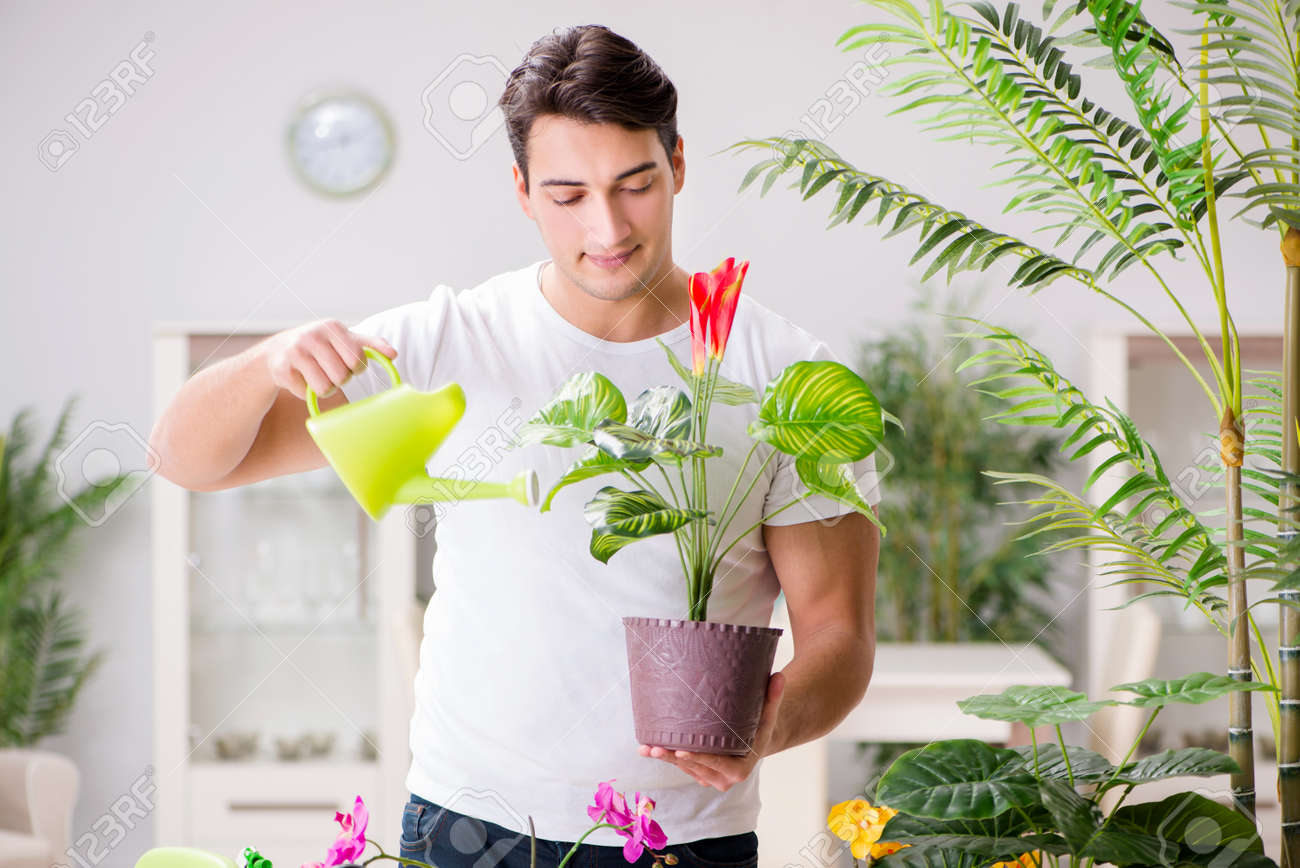 Man Taking Care Of Plants At Home Stock Photo Picture And Royalty